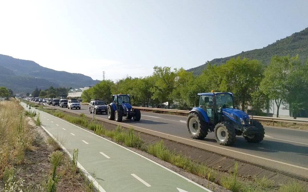 El PSOE respalda las movilizaciones del sector olivarero y destaca el incesante trabajo del Gobierno central con el olivar tradicional